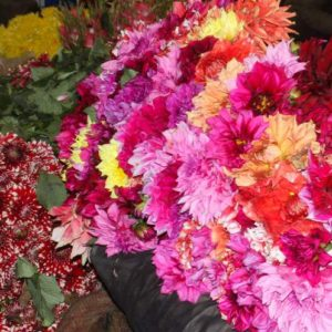 photo tour of flower market in Delhi