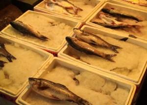 photo walk of fish market