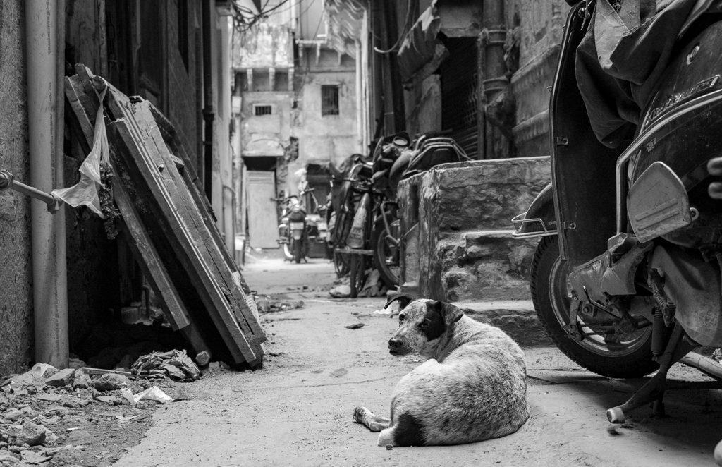 Old-Delhi-Photo-Walk-Lesleyanne-Ryan