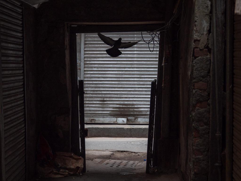 Old-Delhi-street Photo-Walk-Lesleyanne-Ryan
